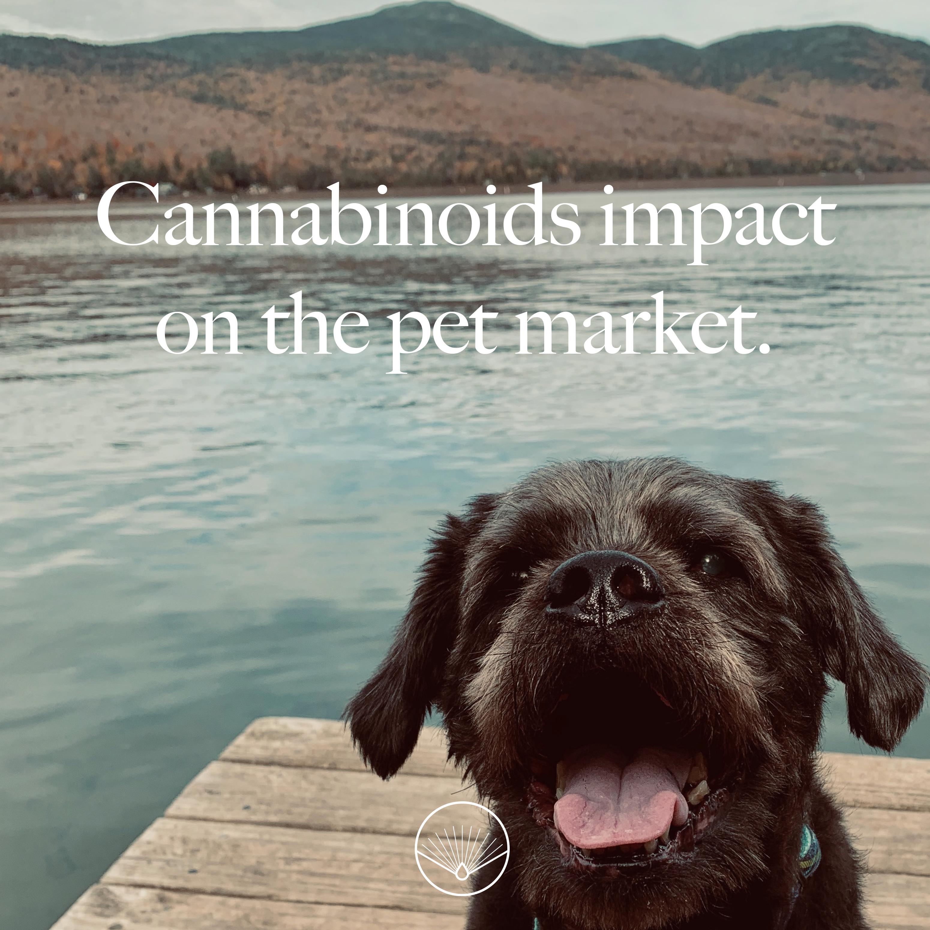 CBD Pet Market